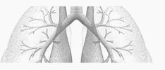 allergie longen